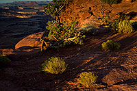 /images/133/2010-09-27-canyon-grand-35157.jpg - #08739: Green River Overlook in Canyonlands … September 2010 -- Green River Overlook, Canyonlands, Utah