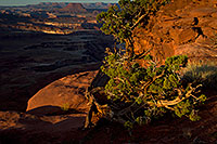 /images/133/2010-09-27-canyon-grand-35160.jpg - #08740: Green River Overlook in Canyonlands … September 2010 -- Green River Overlook, Canyonlands, Utah