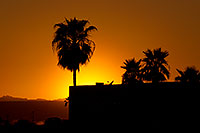 /images/133/2011-04-01-havasu-sunset-palms-65489.jpg - #09115: Sunset near London Bridge in Lake Havasu City … April 2011 -- Beach Park, Lake Havasu City, Arizona