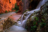 /images/133/2011-06-25-havasu-mooney-small-79559.jpg - #09341: Near Mooney Falls … June 2011 -- Havasu Creek, Havasu Falls, Arizona