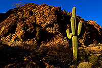 /images/133/2012-03-14-supers-cactus-lone-148710.jpg - #10076: Saguaro in the evening in Superstitions … March 2012 -- Apache Trail Road, Superstitions, Arizona