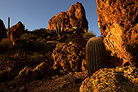/images/133/2012-03-27-supers-cactus-151211.jpg - #10100: Saguaro Cactus in Superstitions … March 2012 -- Superstitions, Arizona