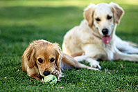 /images/133/2012-04-10-chandler-park-both-153598.jpg - #10121: Bella and Lucy in Chandler … April 2012 -- Chandler, Arizona
