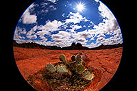 /images/133/2012-04-15-sedona-holes-fishe-5d2_0510.jpg - #10135: Fisheye view of Prickly Pear Cactus in Sedona … April 2012 -- Cathedral Rock, Sedona, Arizona