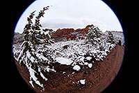 /images/133/2012-04-15-sedona-snow-fishe-5d2_0324.jpg - #10146: Fisheye view of Prickly Pear Cactus in Sedona … April 2012 -- Schnebly Hill, Sedona, Arizona