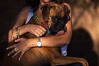 /images/133/2012-10-28-gilbert-harley-1dx_11976.jpg - #10307: Harley (Boxer) in Gilbert … October 2012 -- Gilbert, Arizona