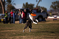 /images/133/2013-01-18-havasu-balloons-dogs-20072.jpg - #10706: Jumping dogs of Hot Dogs Club at Lake Havasu Balloon Fest … January 2013 -- Lake Havasu City, Arizona