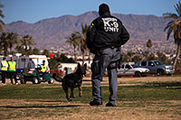 /images/133/2013-01-18-havasu-balloons-dogs-20322.jpg - #10741: K9 Police dog Thor at Lake Havasu Balloon Fest … January 2013 -- Lake Havasu City, Arizona