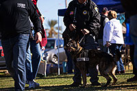 /images/133/2013-01-18-havasu-balloons-dogs-20337.jpg - #10743: K9 Police dog Thor at Lake Havasu Balloon Fest … January 2013 -- Lake Havasu City, Arizona