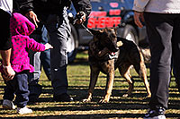/images/133/2013-01-18-havasu-balloons-polic-20367.jpg - #10747: K9 Police dog Thor at Lake Havasu Balloon Fest … January 2013 -- Lake Havasu City, Arizona