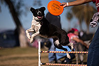 /images/133/2013-01-20-havasu-balloons-dogs-21650.jpg - #10752: Jumping dogs of Hot Dogs Club at Lake Havasu Balloon Fest … January 2013 -- Lake Havasu City, Arizona