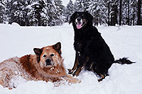 /images/133/2013-03-09-flagstaff-booda-dudle-29286.jpg - #10880: Booda and Dudley in snow in Flagstaff … March 2013 -- Flagstaff, Arizona