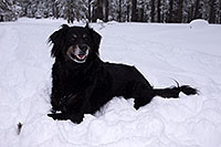 /images/133/2013-03-09-flagstaff-booda-dudle-29316.jpg - #10881: Booda and Dudley in snow in Flagstaff … March 2013 -- Flagstaff, Arizona