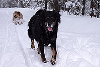 /images/133/2013-03-09-flagstaff-booda-dudle-29551.jpg - #10886: Booda and Dudley in snow in Flagstaff … March 2013 -- Flagstaff, Arizona