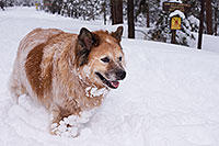 /images/133/2013-03-09-flagstaff-booda-dudle-29575.jpg - #10887: Booda and Dudley in snow in Flagstaff … March 2013 -- Flagstaff, Arizona