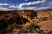 /images/133/2013-04-17-supers-dirt-cliffs-36917.jpg - #11055: Agave in evening light at a cliff overlook … April 2013 -- Apache Trail Road #2, Superstitions, Arizona