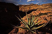 /images/133/2013-04-17-supers-dirt-cliffs-36939.jpg - #11058: Agave in evening light at a cliff overlook … April 2013 -- Apache Trail Road #2, Superstitions, Arizona