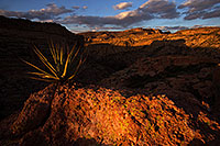 /images/133/2013-04-17-supers-dirt-cliffs-36978.jpg - #11061: Agave in evening light at a cliff overlook … April 2013 -- Apache Trail Road #2, Superstitions, Arizona