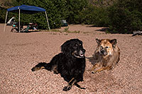 /images/133/2013-04-27-apache-lake-boo-dud-37202.jpg - #11071: Dudley and Booda at Apache Lake … April 2013 -- Apache Lake, Superstitions, Arizona