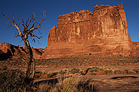 /images/133/2013-11-01-courthouse-tree-1dx_3841.jpg - #11213: Courthouse Towers in Arches National Park … November 2013 -- Courthouse Towers, Arches Park, Utah