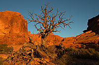 /images/133/2013-11-01-windows-tree-1dx_4135.jpg - #11224: Tree in Arches National Park … December 2013 -- Windows, Arches Park, Utah