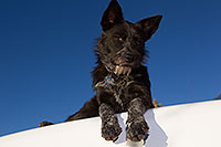 /images/133/2013-11-08-moab-mtns-kiera-1d4_4191.jpg - #11276: Kiera (Terrier, 1 year old) in Moab … November 2013 -- Moab, Utah