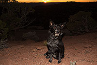 /images/133/2013-11-08-moab-mtns-kiera-1d4_4392.jpg - #11281: Kiera (Terrier, 1 year old) in Moab … November 2013 -- Moab, Utah