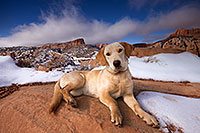 /images/133/2013-12-02-tsegi-annie-1dx_8550.jpg - #11378: Annie (Labrador Retriever) in Tsegi Canyon … December 2013 -- Tsegi Canyon, Utah