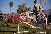 /images/133/2014-01-17-havasu-dogs-1dx_1101.jpg - #11621: Frisbee dog Bumper at Lake Havasu Balloon Fest … January 2014 -- Lake Havasu City, Arizona
