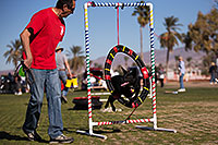 /images/133/2014-01-17-havasu-dogs-1dx_1450.jpg - #11623: Frisbee dog Sami at Lake Havasu Balloon Fest … January 2014 -- Lake Havasu City, Arizona