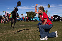 /images/133/2014-01-19-havasu-dogs-1dx_8255.jpg - #11690: Frisbee dog Sami at Lake Havasu Balloon Fest … January 2014 -- Lake Havasu City, Arizona