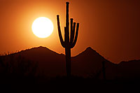/images/133/2014-06-10-supers-sunset-mesa-5d2_6620.jpg - #11897: Sunset in Superstitions … June 2014 -- Sunset Cactus, Superstitions, Arizona