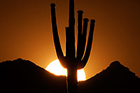 /images/133/2014-06-10-supers-sunset-mesa-5d2_6659.jpg - #11899: Sunset in Superstitions … June 2014 -- Sunset Cactus, Superstitions, Arizona