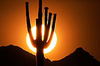 /images/133/2014-06-13-supers-sunset-5d3_0311.jpg - #11905: Sunset in Superstitions … June 2014 -- Sunset Cactus, Superstitions, Arizona