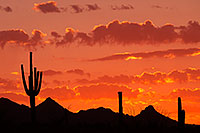 /images/133/2014-06-16-supers-sunset-5d2_7356.jpg - #11945: Sunset in Superstitions … June 2014 -- Sunset Cactus, Superstitions, Arizona