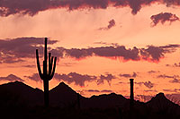 /images/133/2014-06-16-supers-sunset-5d2_7411.jpg - #11948: Sunset in Superstitions … June 2014 -- Sunset Cactus, Superstitions, Arizona