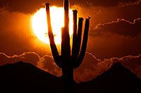 /images/133/2014-06-16-supers-sunset-5d3_3100.jpg - #11950: Sunset in Superstitions … June 2014 -- Sunset Cactus, Superstitions, Arizona