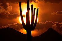 /images/133/2014-06-16-supers-sunset-5d3_3157.jpg - #11951: Sunset in Superstitions … June 2014 -- Sunset Cactus, Superstitions, Arizona