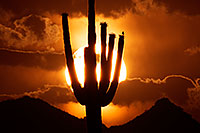 /images/133/2014-06-16-supers-sunset-5d3_3171.jpg - #11952: Sunset in Superstitions … June 2014 -- Sunset Cactus, Superstitions, Arizona