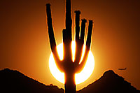 /images/133/2014-06-18-supers-sunset-plan-5d2_7510.jpg - #11957: Sunset in Superstitions … June 2014 -- Sunset Cactus, Superstitions, Arizona