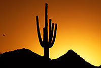 /images/133/2014-06-19-supers-sunset-1d4_0083.jpg - #11958: Sunset in Superstitions … June 2014 -- Sunset Cactus, Superstitions, Arizona