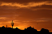 /images/133/2014-07-01-supers-sunset-cact-1dx_0690.jpg - #12026: Sunset in Superstitions … June 2014 -- Sunset Cactus, Superstitions, Arizona