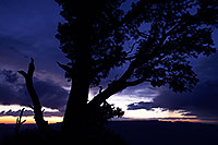/images/133/2014-07-03-gc-dview-views-1dx_0997.jpg - #12029: Night tree silhouette at Desert View in Grand Canyon … July 2014 -- Desert View, Grand Canyon, Arizona