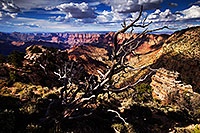 /images/133/2014-07-05-gc-lipan-tree-1dx_2376.jpg - #12036: Afternoon at Lipan Point at Grand Canyon … July 2014 -- Lipan Point, Grand Canyon, Arizona