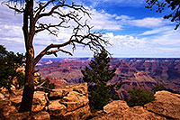 /images/133/2014-07-07-gc-mather-tree-1dx_1246.jpg - #12056: Morning at Mather Point at Grand Canyon … July 2014 -- Mather Point, Grand Canyon, Arizona