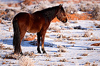 /images/133/2015-01-09-monvalley-horses-1dx_1072.jpg - #12346: Monument Valley, Utah … January 2015 -- Monument Valley, Utah