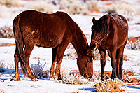 /images/133/2015-01-09-monvalley-horses-1dx_1223.jpg - #12349: Monument Valley, Utah … January 2015 -- Monument Valley, Utah