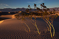 /images/133/2015-08-14-dv-mesquite-11-6d_7393.jpg - #12594: Mesquite Sand Dunes in Death Valley … August 2015 -- Mesquite Sand Dunes, Death Valley, California