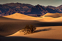 /images/133/2015-08-16-dv-mesquite-1dx_3398.jpg - #12599: Mesquite Sand Dunes in Death Valley … August 2015 -- Mesquite Sand Dunes, Death Valley, California