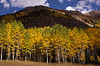 /images/133/2015-09-19-red-mountain-5d3_0956.jpg - #12616: Aspen trees along Red Mountain Pass, Colorado … September 2015 -- Red Mountain Pass, Colorado